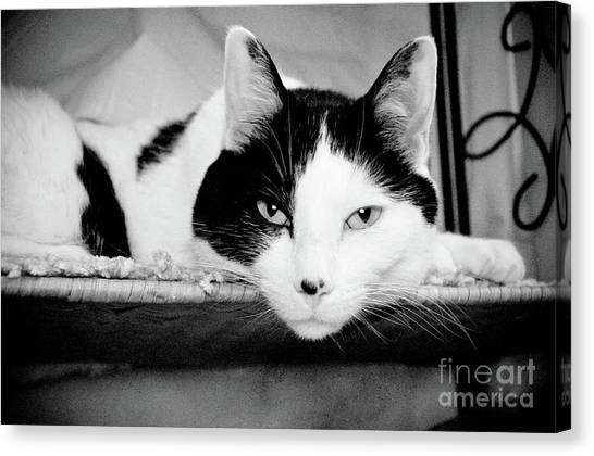 Andee Design Monochrome Canvas Print - Le Cat by Andee Design