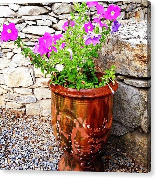 Decorative Canvas Print - Anduze Flower Pot With Petunias by Cristina Stefan