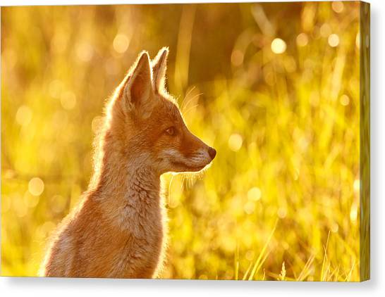 Gold Canvas Print - Le P'tit Renard by Roeselien Raimond