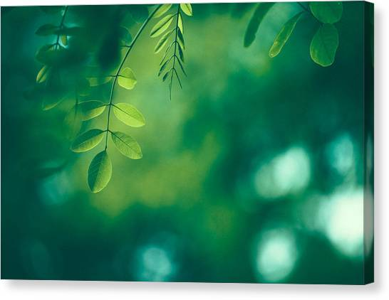 Leaf Background Canvas Print by Jasmina007