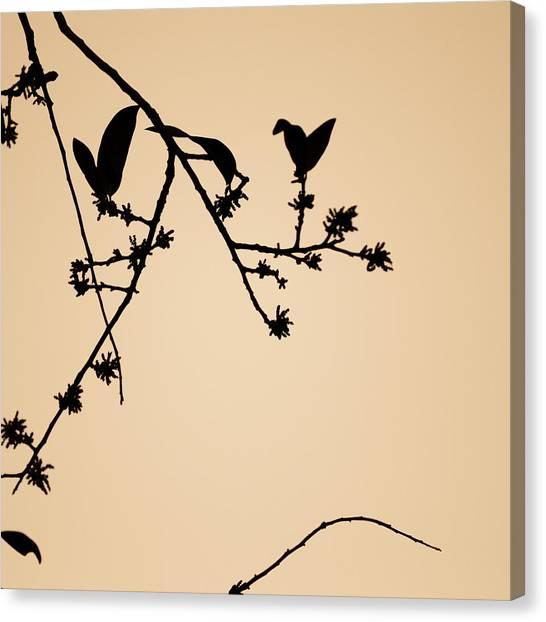 Leaf Birds Canvas Print