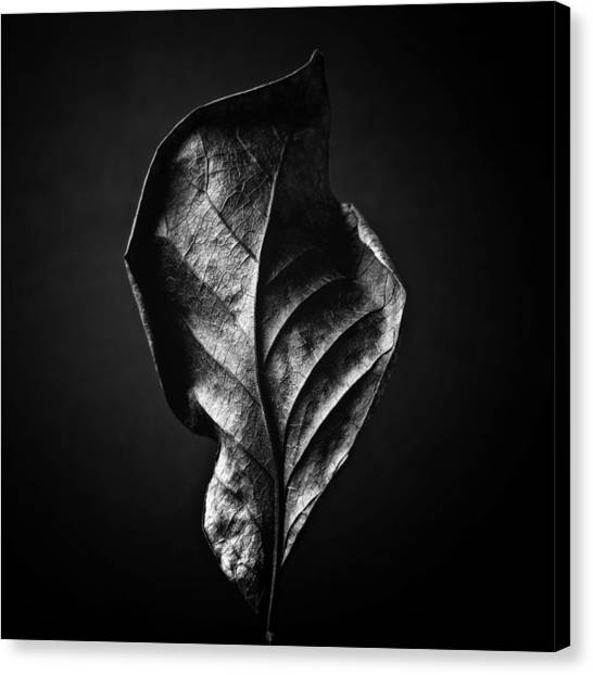 Black And White Nature Still Life Art Work Photography Canvas Print