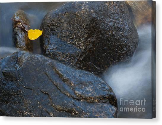 Leaf Bridge One Canvas Print by Vinnie Oakes