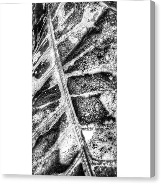 Minimalism Canvas Print - Leaf #flora #blackandwhite #monochrome by Sanz Lashley