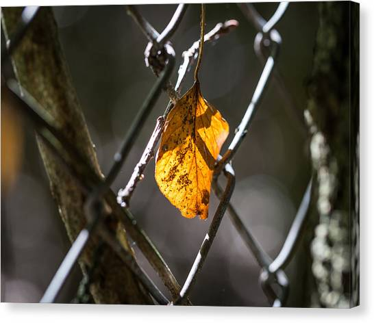 Leaf. Canvas Print