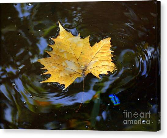 Leaf In Pond Canvas Print