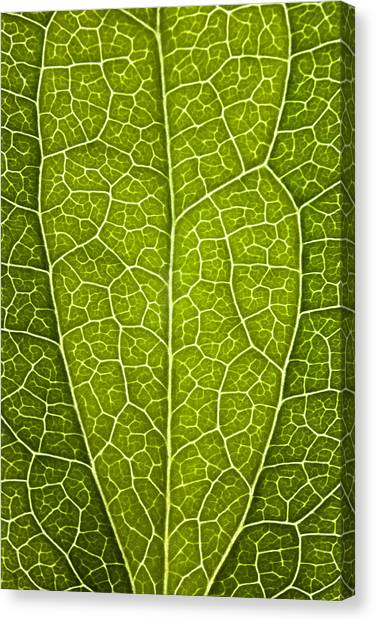 Leaf Lines V Canvas Print by Natalie Kinnear