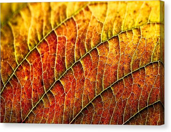 Leaf Rainbow Canvas Print