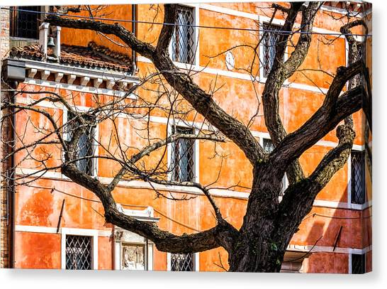 Leafless Tree In Venice Canvas Print