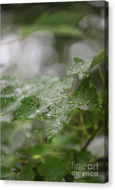 Leafy Raindrops Canvas Print