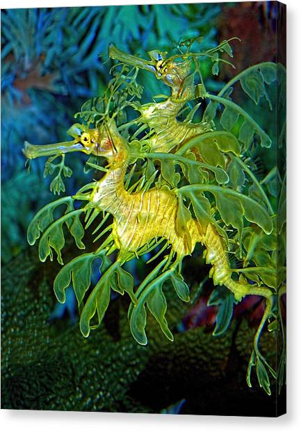 Blue Camo Canvas Print - Leafy Sea Dragons by Donna Proctor