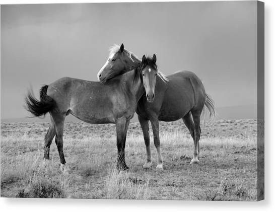 Lean On Me B And W Wild Mustang Canvas Print