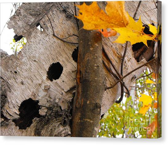 Leaning Birch Canvas Print