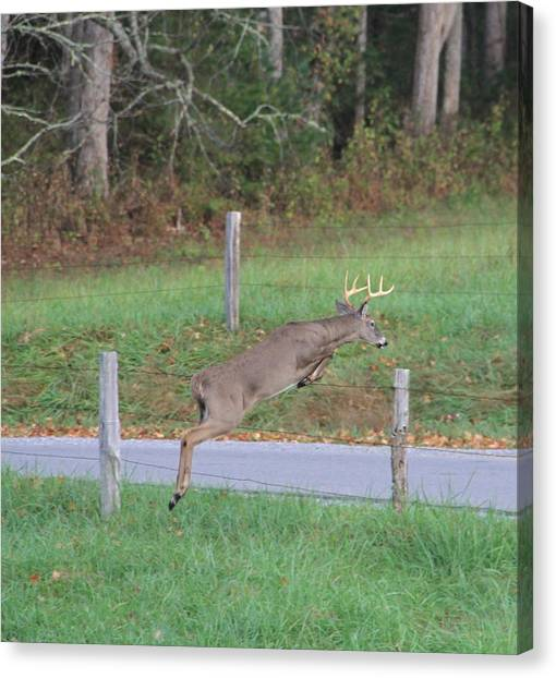 Gatlinburg Tennessee Canvas Print - Leaping Buck In Smoky Mountains by Dan Sproul