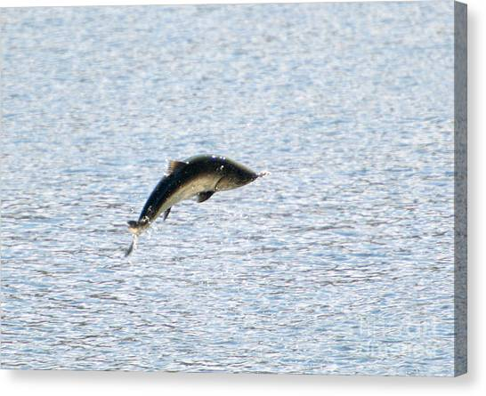 Salmon Canvas Print - Leaping Chinook by Mike  Dawson