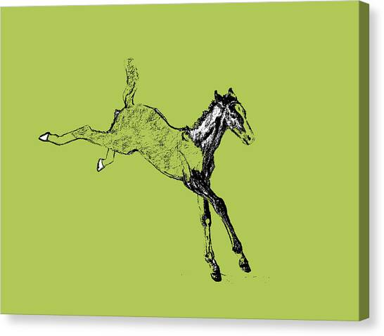 Leaping Foal Greens Canvas Print