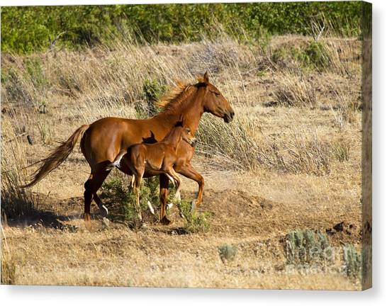 Wild Horse Canvas Print - Learning To Run by Mike  Dawson
