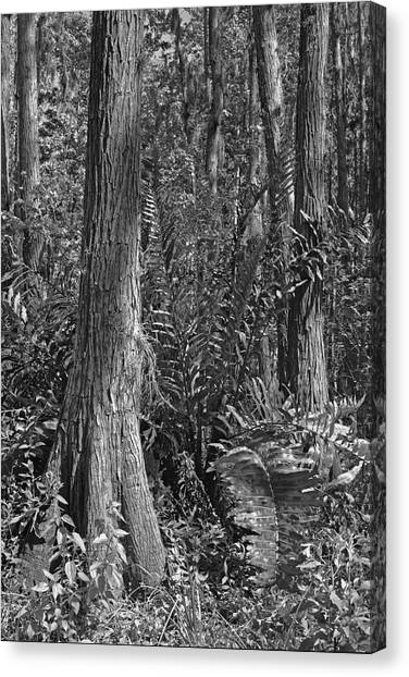 Leather Fern. Shingle Creek Basin. Canvas Print