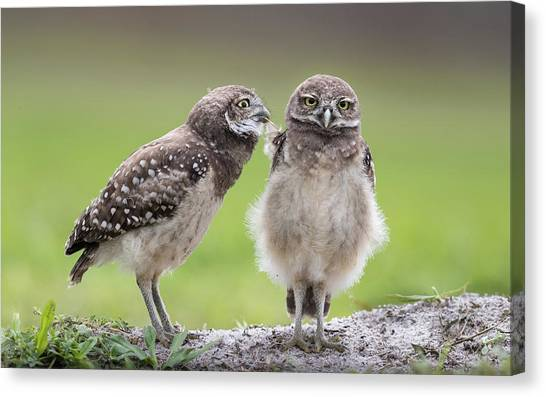 Florida Wildlife Canvas Print - Leave Me Alone! by Greg Barsh