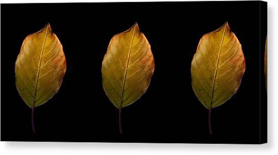 Leaves - A Golden Trio Canvas Print by James Hammen