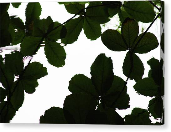 Leaves Drifting Canvas Print by James Knight