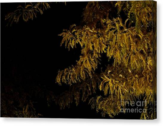Leaves In The Night I Canvas Print by Phil Dionne