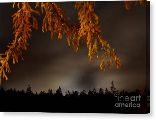 Leaves In The Night II Canvas Print by Phil Dionne