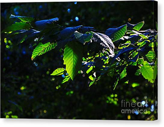 Leaves Of Shining Canvas Print by Tim Rice