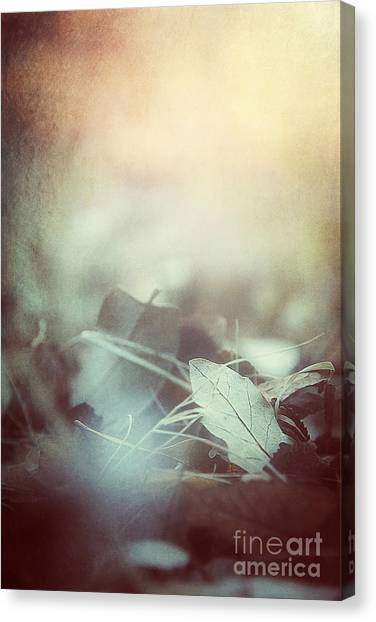 Leaves Of Time  Canvas Print