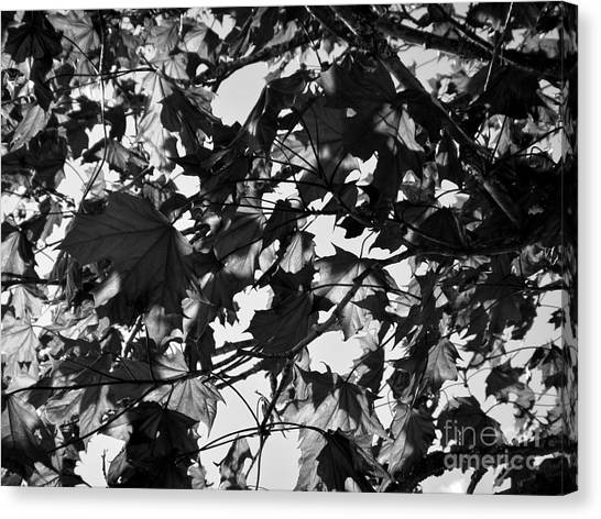 Canvas Print featuring the photograph Leaves On A Tree Ll by Laura  Wong-Rose