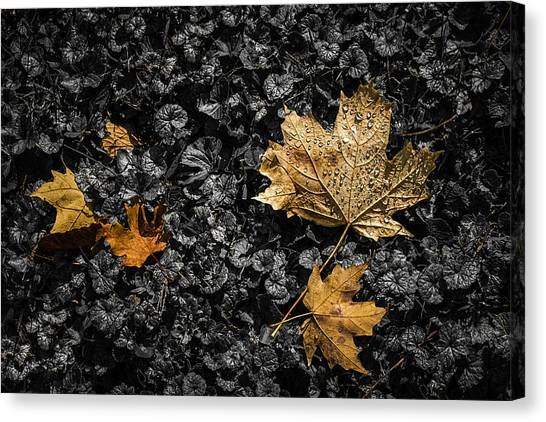 Maple Leaf Art Canvas Print - Leaves On Forest Floor by Tom Mc Nemar