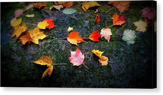 Leaves On Rock  Canvas Print