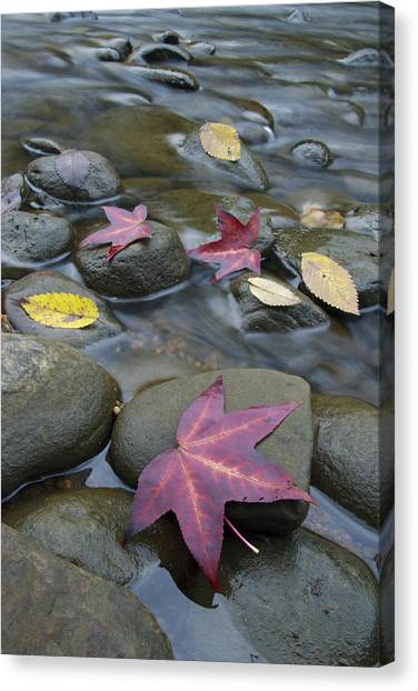 Big South Canvas Print - Leaves On Rocks by Byron Jorjorian