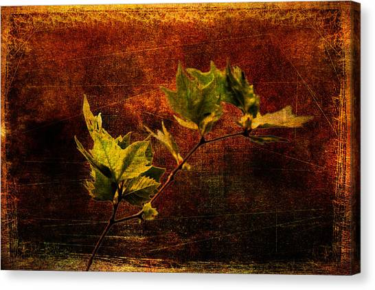 Leaves On Texture Canvas Print