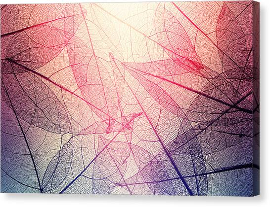 Leaves Skeleton Background Canvas Print by Andrey Danilovich