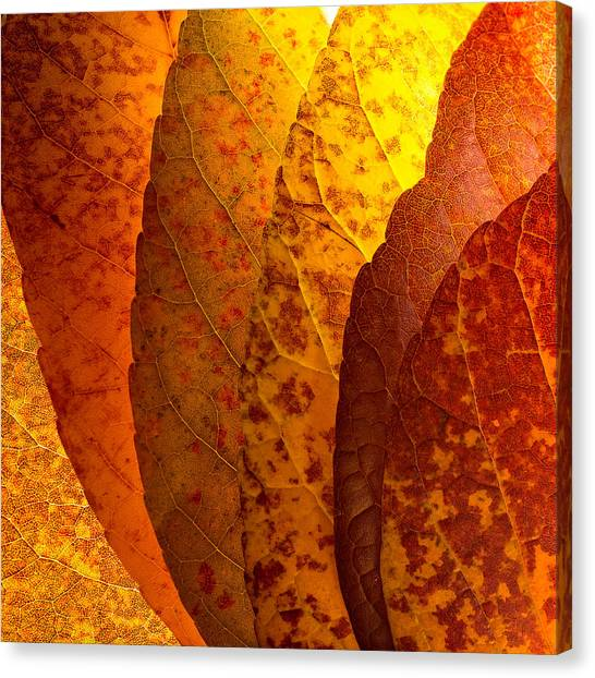 Leaves Unmasked Canvas Print