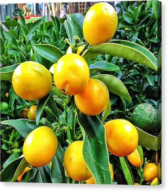 Lemons Canvas Print - #lemon#colors#colorsoftheweek by Helen Vitkalova