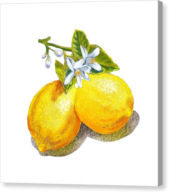 Lemons Canvas Print - Lemons And Blossoms by Irina Sztukowski