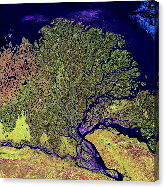 Satellite Canvas Print - Lena River Delta by Adam Romanowicz