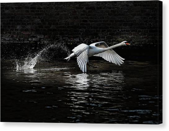 Swans Canvas Print - L\'envol by Piet Flour