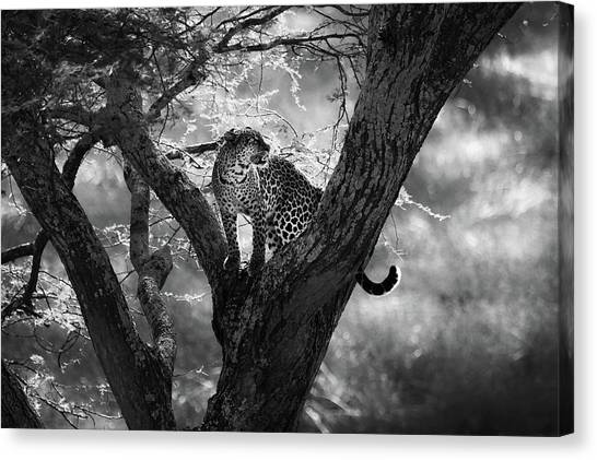 Africa Wildlife Canvas Print - Leopard by Bjorn Persson