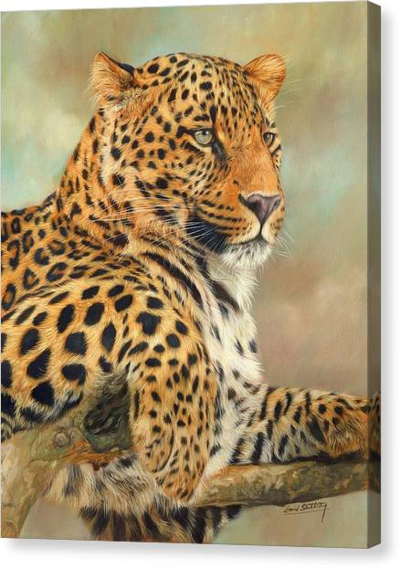 Wolves Canvas Print - Leopard by David Stribbling