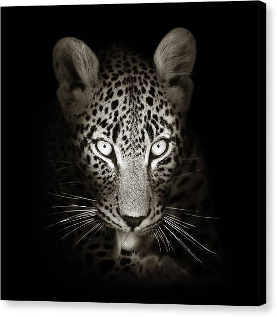 Tongue Canvas Print - Leopard Portrait In The Dark by Johan Swanepoel