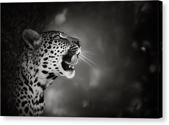 Teeth Canvas Print - Leopard Portrait by Johan Swanepoel