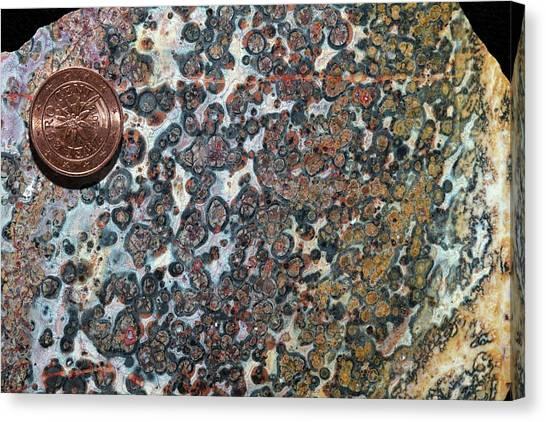 Gemstones Canvas Print - Leopard Skin Jasper Close by Dirk Wiersma
