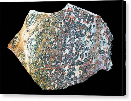 Gemstones Canvas Print - Leopard Skin Jasper I by Dirk Wiersma