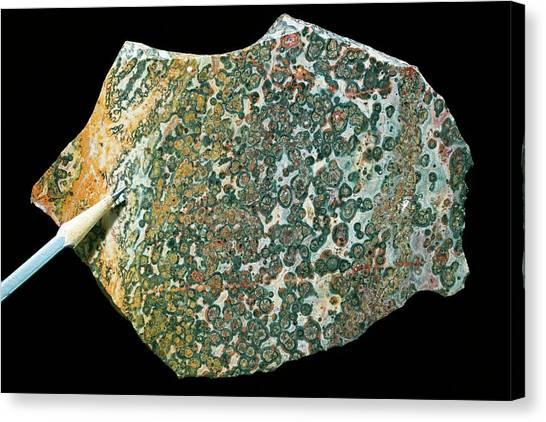 Gemstones Canvas Print - Leopard Skin Jasper II by Dirk Wiersma
