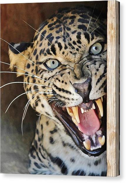 Leopard Snarling Canvas Print