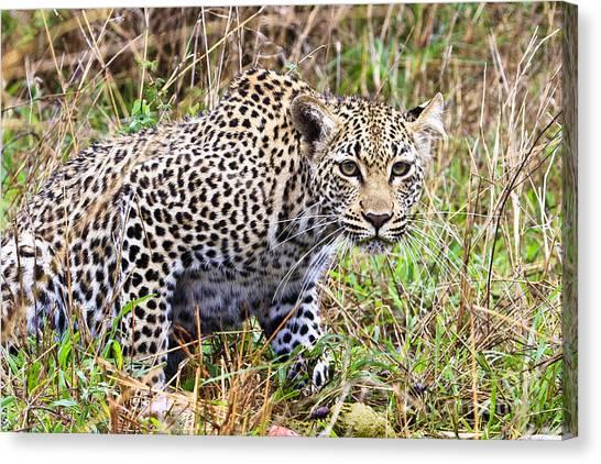 Leopard Stare Canvas Print