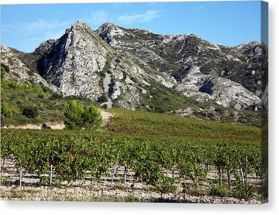 Southern France Canvas Print - Les Alpilles Little Alps, South Of St by Carol Barrington